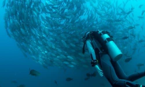 Tauchen und Aquaristik